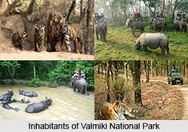 Valmiki National park in Bihar