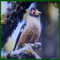 Naina Devi Wildlife Sanctuary